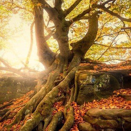 tree-2942469_640