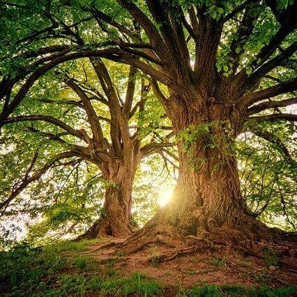 trees-3822149_640